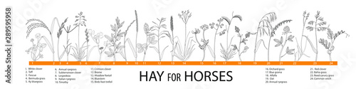 Vector illustration of  hay plants for horses - big set. Fototapeta