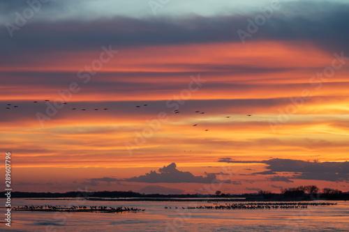 Vibrant sunset as sandhill cranes flock to river