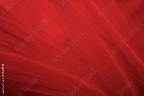 Beautiful red feather pattern texture background  - 289619567