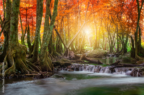 Printed kitchen splashbacks Forest river Forest in autumn with river and waterfalls. There are beautiful rivers and waterfalls in the autumn forest. Wild Autumn with beautiful rivers and waterfalls.