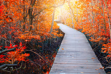 Background For Red Autumn Forest Pathway Beautiful Park Scenery Photography Backdrop Sunny Fall Leaf Road Outdoors Holiday Travel Romantic Artistic Photo Studio Props Wallpaper