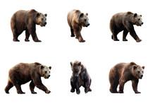 Set Of Brown Bear Over White B...