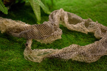Python Molt On A Grass, Focus Selective