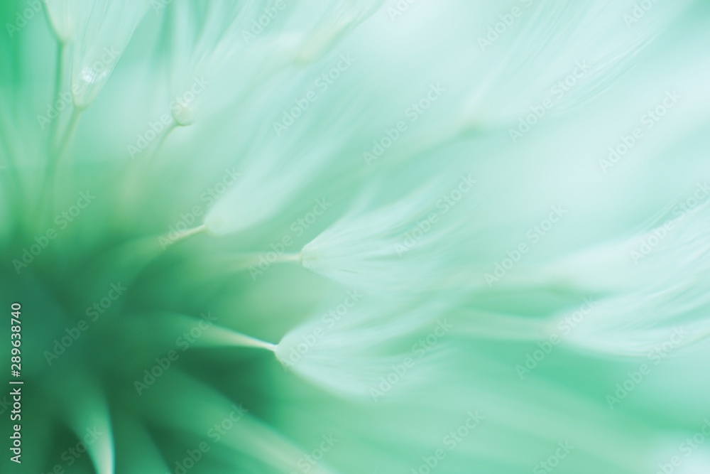 Fototapety, obrazy: Abstract blured dandelion flower in trendy neo mint color
