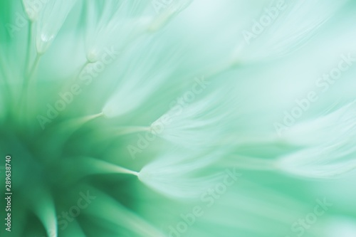 Abstract blured dandelion flower in trendy neo mint color - 289638740