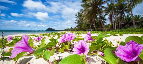 Foto auf AluDibond Himmelblau Beautiful tropical beach on sunny summer.