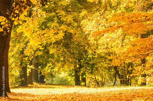 Foto auf Leinwand Orange Leaf fall in the park in autumn. Landscape with maples and other trees