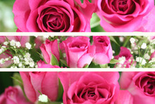 Three Pink Roses Landscape