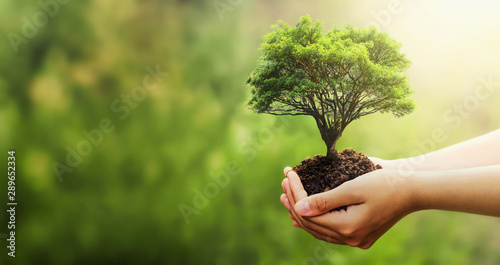 Fototapeta hand holding tree on blur green nature background. concept eco earth day obraz