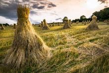 Traditional Irish Haystacks