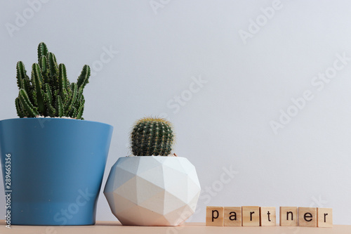 Foto auf AluDibond Kakteen set of various cactus plants in pots. Cactus plant in different pot and view on table during gardening nursery cactus with space for you brand or logo