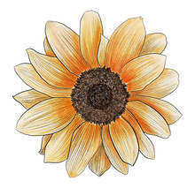 Watercolor Hand Painted Sunflo...
