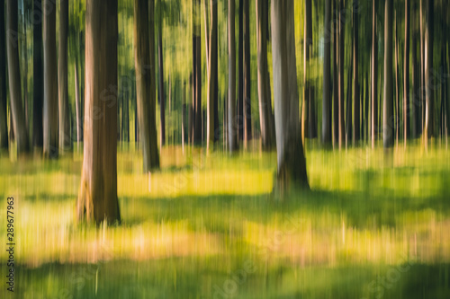 Foto auf AluDibond Orange Intentional camera movement ICM photo of a green forest on a sunny summer day. Blurred nature background concept