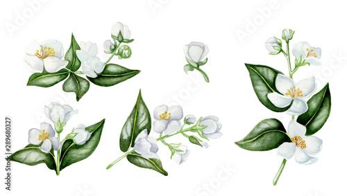 Set of white jasmine фототапет