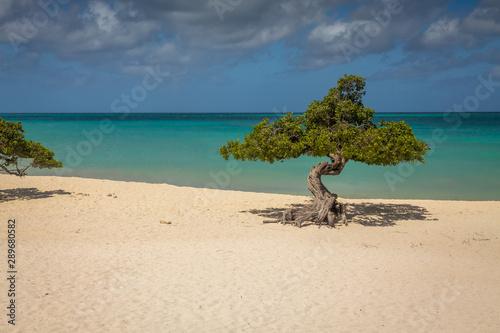 Divi Divi Trees in Aruba Eagle Beach Canvas Print