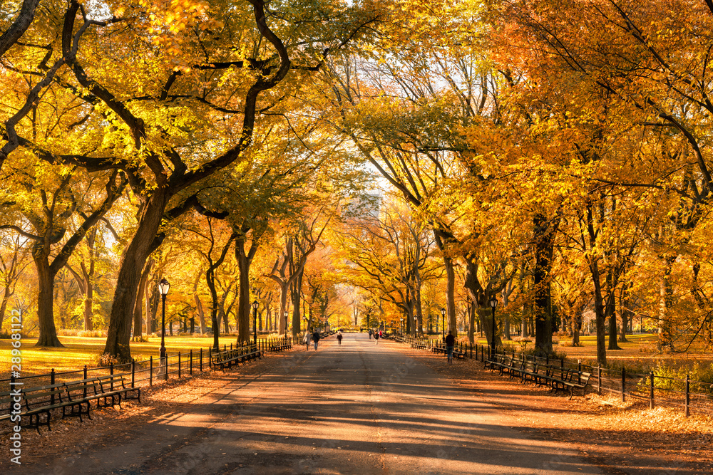 Fototapety, obrazy: Colorful Central Park in New York City during autumn season