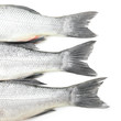 Fresh seabass fish on white background