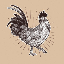 Rooster, Hand Draw Sketch Vector.
