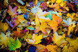 Red and orange autumn leaves background. Outdoor. Colorful backround image of fallen autumn leaves