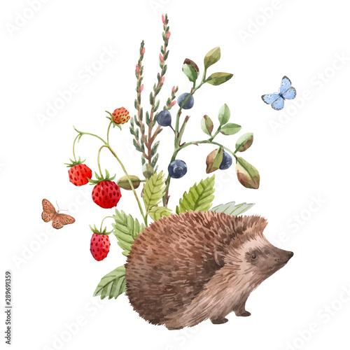 Fototapeta Watercolor hedgehog vector illustration