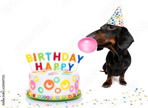 Keuken foto achterwand Crazy dog happy birthday dog
