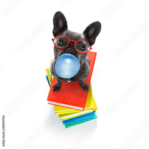In de dag Crazy dog smart dog and books, chewing bubble gum