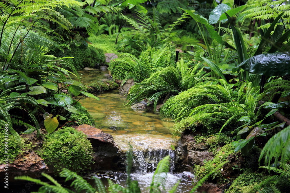 Fototapety, obrazy: Forest stream with green vegetation in the river: ferns,  leaves and rocks covered with moss.