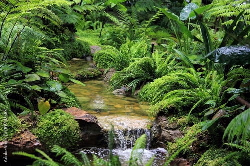 Tablou Canvas Forest stream with green vegetation in the river: ferns,  leaves and rocks covered with moss