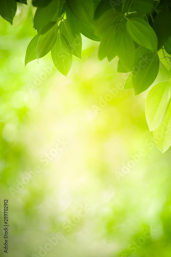 Beautiful nature view of green leaf on blurred greenery background in garden with copy space using as background natural green plants landscape, ecology, fresh wallpaper concept. - 289702912