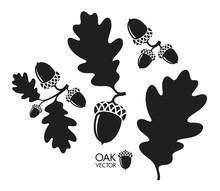 Oak Tree. Silhouette. Isolated...