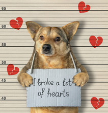 "The Dog Criminal Has The Sign Around His Neck That Says "" I Broke A Lot Of Hearts "". Lineup Background."
