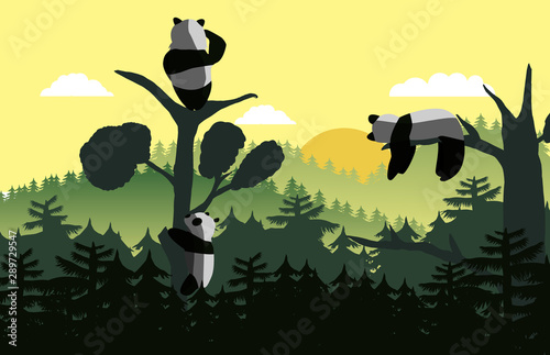 panda on top of the tree with sunrise scene