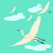 Flock Of Cranes In Flying