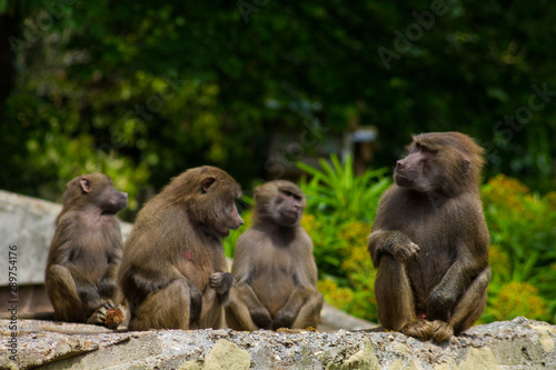 Photo monkies