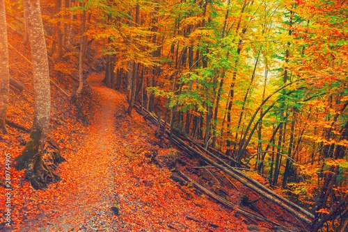 Foto auf AluDibond Rot kubanischen Path in natural park with autumn trees. Sunny autumn picturesque forest landscape with sunlight. Fall trees with colorful leaves background. Forest scenery fall leaves gold foliage road, warm light.
