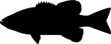 Smallmouth Bass Fish Silhouette Vector