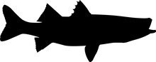 Snook Fish Silhouette Vector