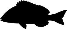 Pigfish Fish Silhouette Vector