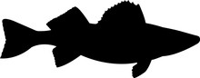 Walleye Pike Fish Silhouette V...