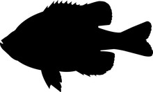 Bluegill Fish Silhouette Vector