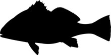 Black Drum Fish Silhouette Vec...