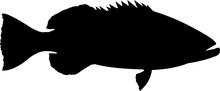 Black Grouper Fish Silhouette ...
