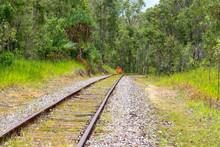 Railway Tracks And Termite Mou...
