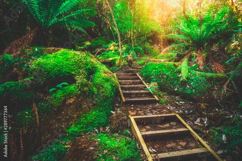 Gris traffic Beautiful path in lush tropical rainforest jungle in Tasman peninsula, Tasmania, Australia. The ancient jurassic age jungle is part of three capes track, famous bush walking of Tasmania, Australia.