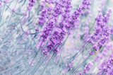 Out-of-focus blur summer blooming lavender background, toned, light and heart bokeh, pastel and soft card. Copy space. - 289792396