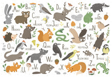 Woodland Alphabet For Children. Cute Flat ABC With Forest Animals. Horizontal Layout Funny Poster For Teaching Reading On White Background..