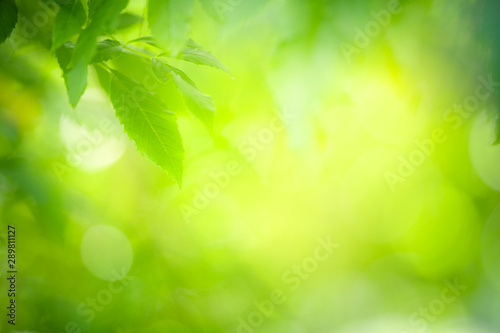 Foto auf AluDibond Lime grun Closeup nature view of green leaf on blurred greenery background in garden with copy space using as background natural green plants landscape, ecology, fresh wallpaper concept.