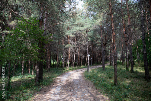 Printed kitchen splashbacks Khaki Forest landscape.Beautiful forest nature. Tall old pine trees. Summer sunny day.