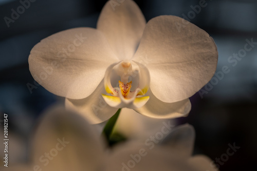 Canvas Prints Orchid Orchideen Zauber