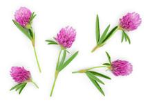 Clover Or Trefoil Flower Medic...